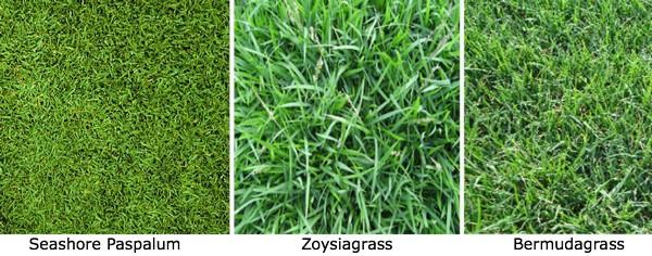 Các loại cỏ sân golf thường được sử dụng